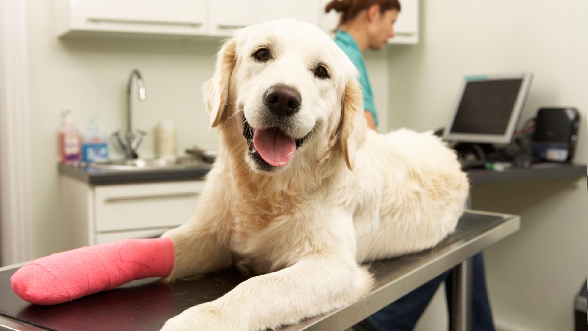 Female-Veterinary-Surgeon-Treating-Dog-In-Surgery