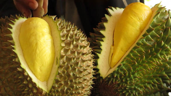 video-travel-durian-articleLarge
